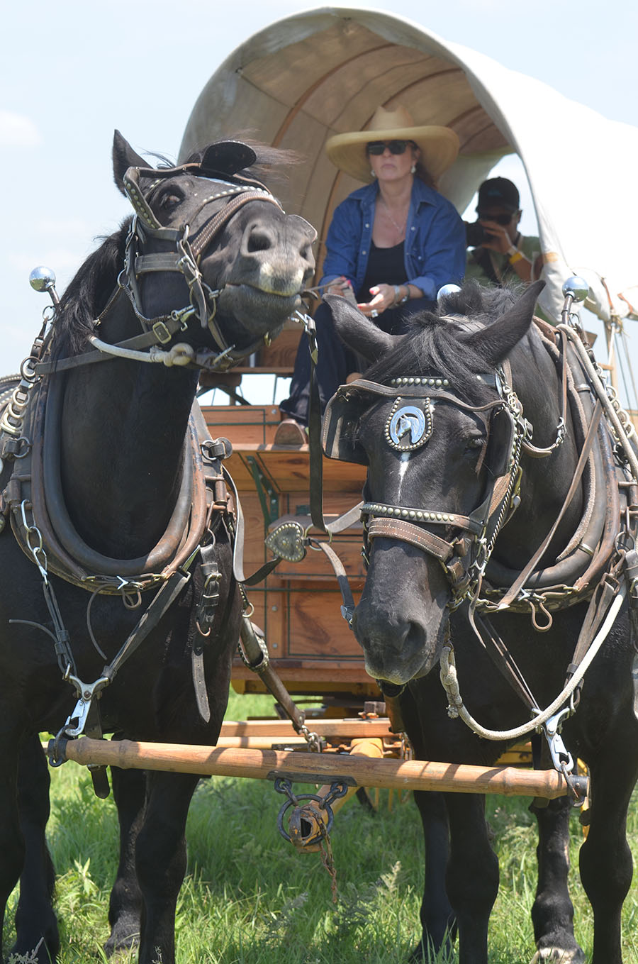 Cindy Morrison, a wagon driver, grabs ahold of her reins as her horse Thor bucks up his head. She said how her horses start to get excited and often like to pose for the camera when people take their photos.  (photo by Madeline Deabler)